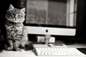 http://www.gdefon.com/download/kitten_computer_keyboard/465238/1920x1280