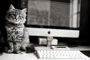 http://www.gdefon.com/download/kitten_computer_keyboard/465238/1920x1280