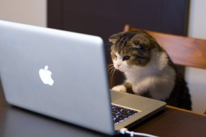 Cat looking at a Macbook.