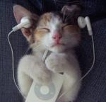 Kitten listening to ipod.