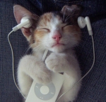 Kitten listening to ipod.