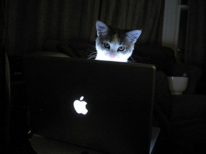 A cat peering at a Macbook Pro.