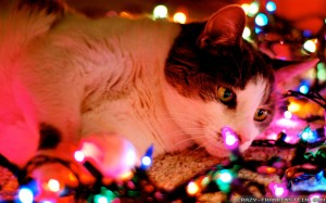 Cat with Christmas lights wallpaper desktopnexus.com