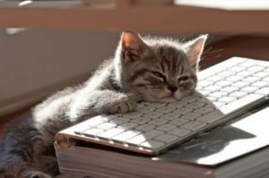 Kitten falling asleep on an Apply keyboard.