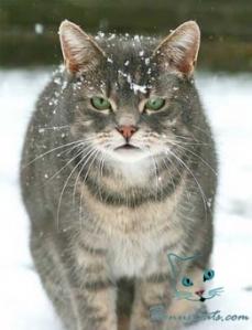 bonuscats.com