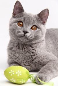 cattime.com