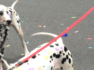 Two guys were walking along with one of the groups and had their Dalmatians with them--with rainbow spots!