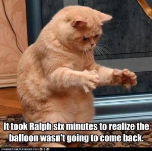 Surprised-Cat-Popped-Balloon