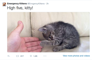 An example from @EmergencyKittens