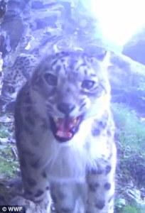 A still from a World Wildlife Fund hidden camera. © World Wildlife Fund (Click to embiggen)