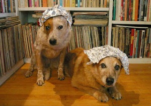 Puppies in tin foil hats