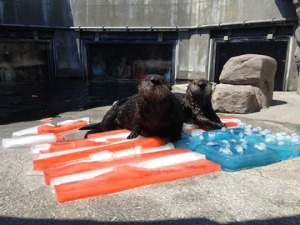 Otters wish you a happy Independence Day (© 2013 Monterey Bay Aquarium)