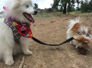 Zen and Hoshi are both rescue dogs who become friends when they found a forever home together. When Hoshi lost his eyesight, Zen become his seeing-eye dog.