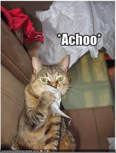*Achoo*