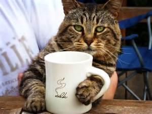 Cat with coffee mug