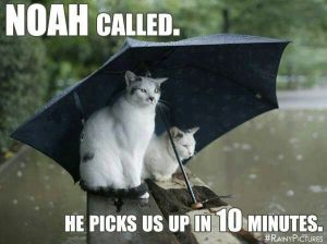 "Two cats sit on a log under a propped up umbrella, surrounded by water and rain. ""Noah called, he picks us up in 10 minutes."""