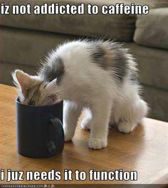 "Cat with head deep in coffee mug ""iz not addicted to caffeine, i juz need it to function"""