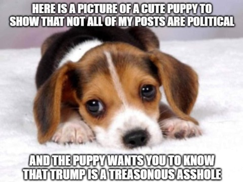 """Here is a picture of a cute puppy to show that not all of my posts are political. And the puppy wants you to know that Trump is a treasonous asshole."""